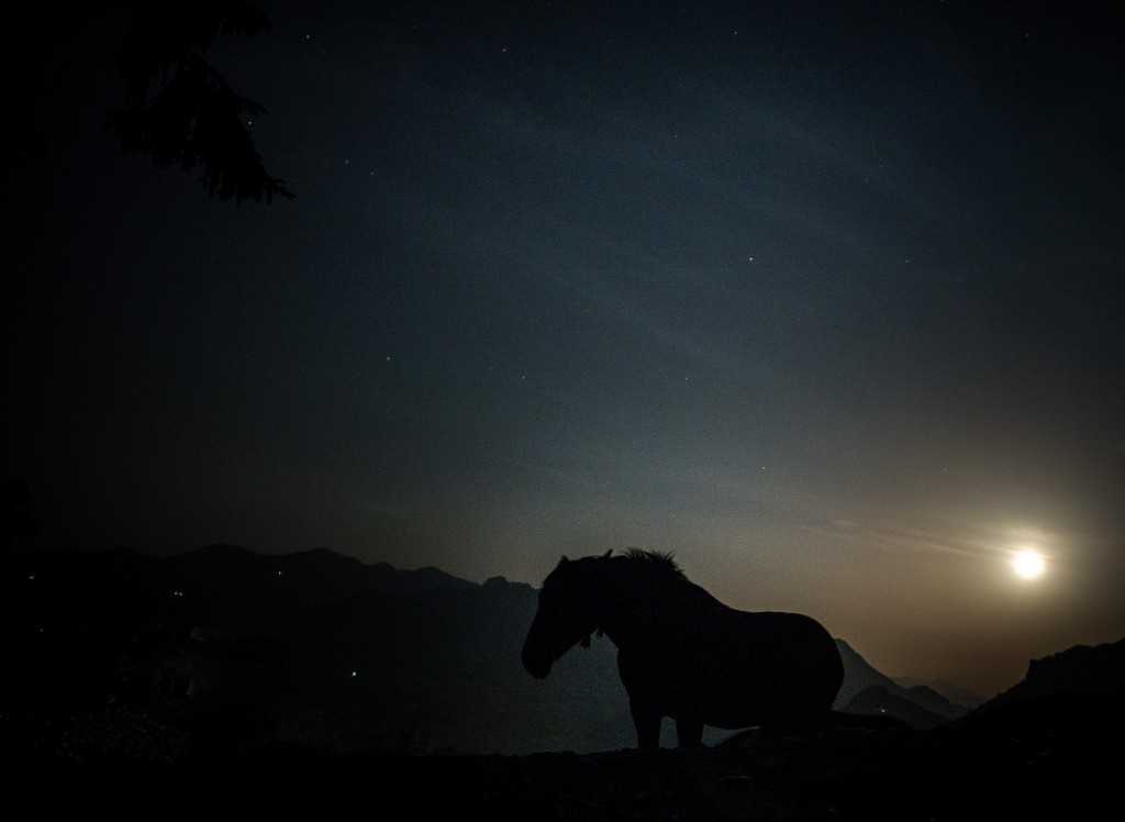 Fullmoon meets horse after Gaya